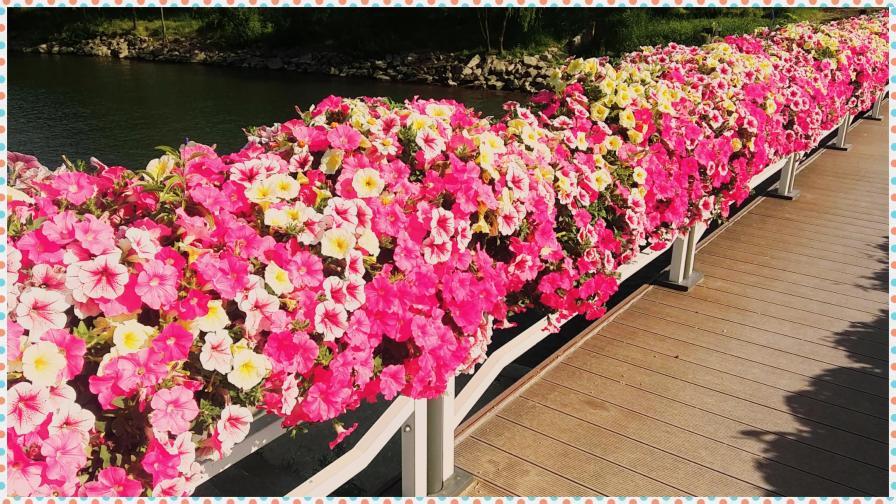 꽃들.jpg