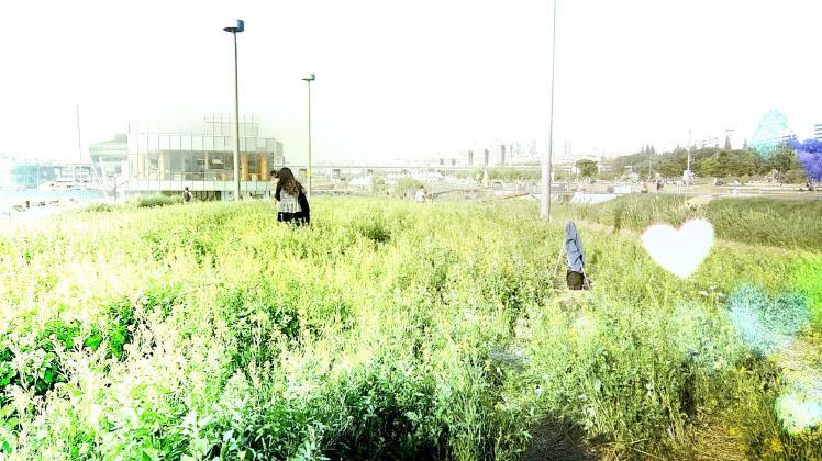 반포 서래섬 유채꽃밭 4