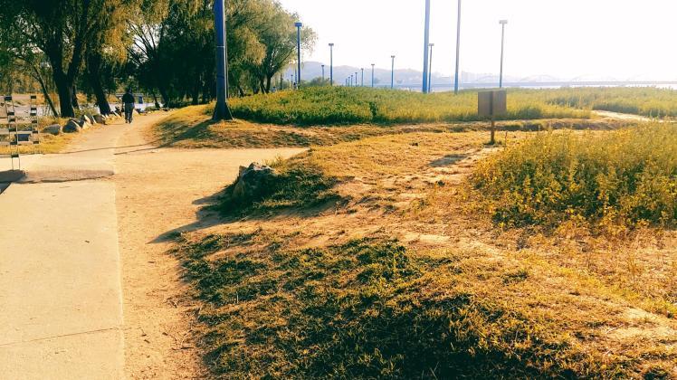 반포 서래섬 유채꽃밭 가는 길목 배경 7
